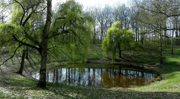 Обои Небольшое озеро, окруженное деревьями в парке
