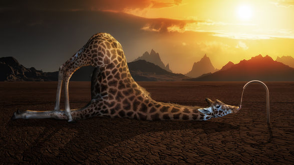 Обои Жираф разлегся на потрескавшейся земле, пьет воду из трубы на фоне гор