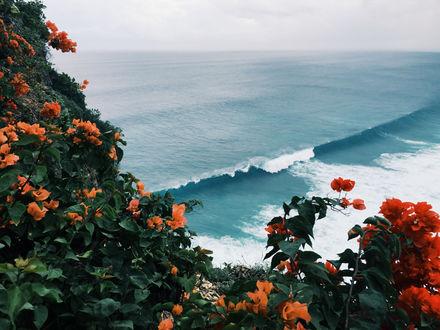 Обои На переднем плане кусты оранжевых цветов и далее море