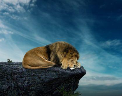 Обои Лев лежит на обрыве, by andrefernandez90
