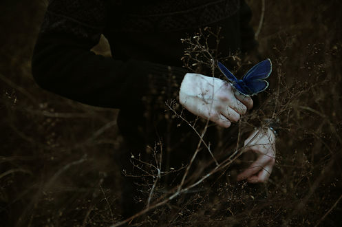 Обои Синяя бабочка сидит на руке парня, фотограф Miriana Pinna