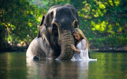 Обои Девушка и слон стоят в воде