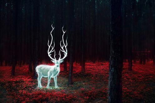 Обои Светящийся олень в волшебном лесу, by streamline69