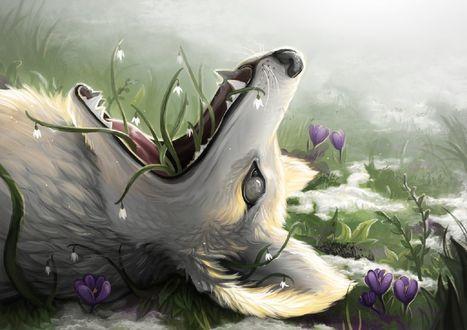 Обои Волк на весенней поляне, с цветами в пасти, by Lambidy