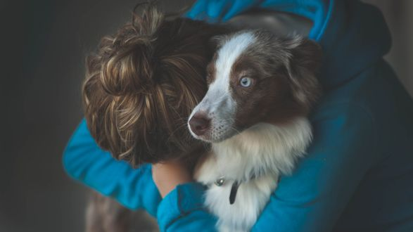 Обои Девушка обнимает пятнистого пса