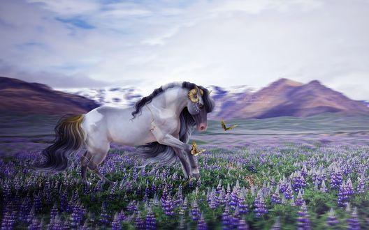 Обои Лошадь бежит по полю вереска, by ellipsiem