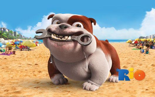 Обои Rio / Рио музыкальный мультфильм, бульдог Луис с гаечным ключом на пляже, персонаж