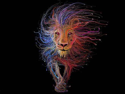 Обои Компьютерная графика разноцветного льва на черном фоне