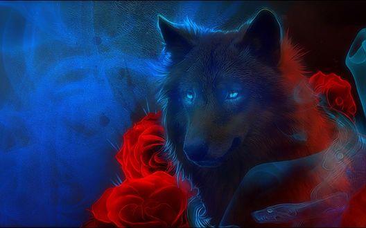 Обои Волк в окружении красных роз и голубого дыма