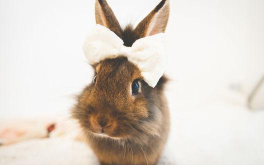 Обои Милый кролик с бантиком на ушках