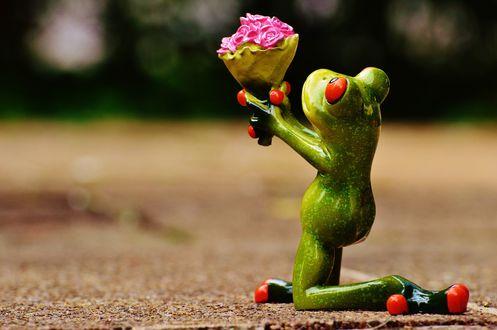 Обои Лягушонок Кермит на коленях с букетом роз, композиция I beg your pardon / Прошу прощения