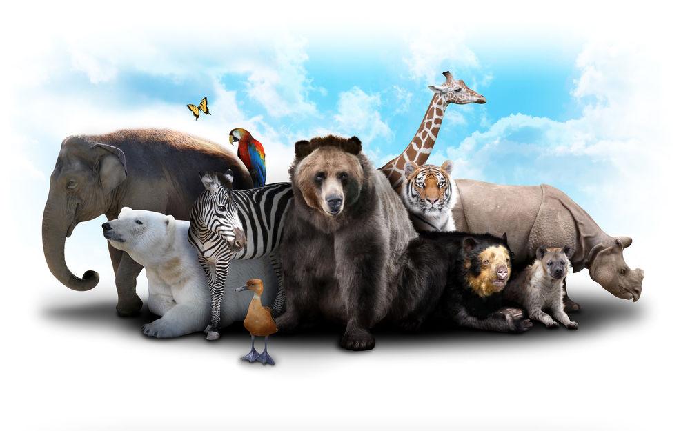 Обои для рабочего стола Собрание различных животных над которыми порхает бабочка, на фоне неба и облаков, приглашение в зоопарк