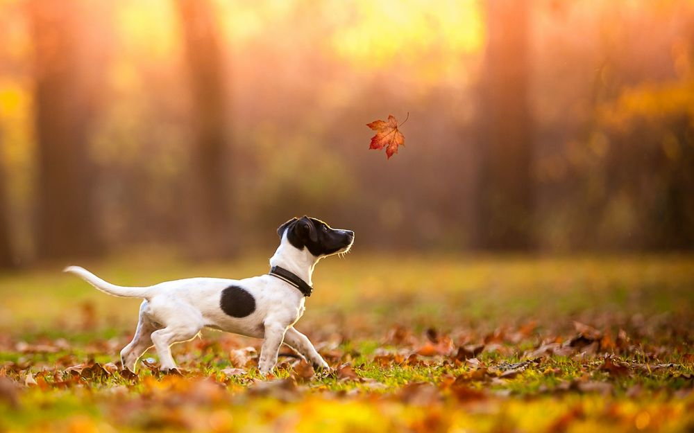 Осенний лист картинка черно белая