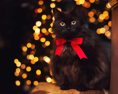 Обои Черный кот с красным бантом на шее, by Thunderi