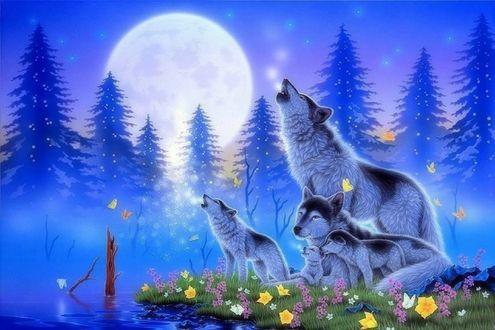 Обои Волчья семья расположились на поляне с цветами на берегу реки на фоне полной луны и хвойных деревьев