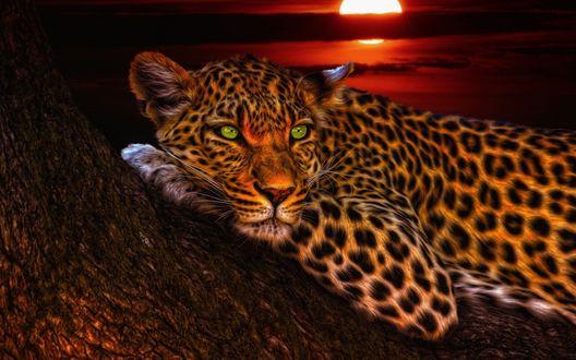 Обои Лежащий на стволе дерева леопард на фоне заката