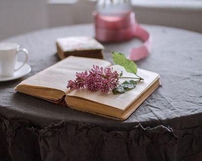Обои Раскрытая книга с веткой сирени на столе с предметами