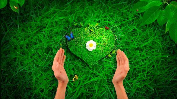 Обои Руки протянуты к сердечку выложенному из зеленой травы, с цветком в середине и летающими над ним бабочками