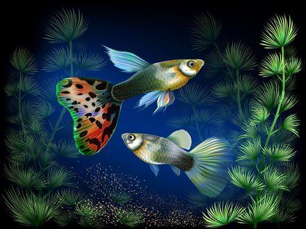 Обои Красивые тропические рыбки, плавают в воде аквариума среди водорослей