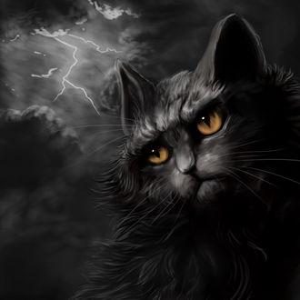 Обои Сердитый черный кот под грозовыми тучами с молнией