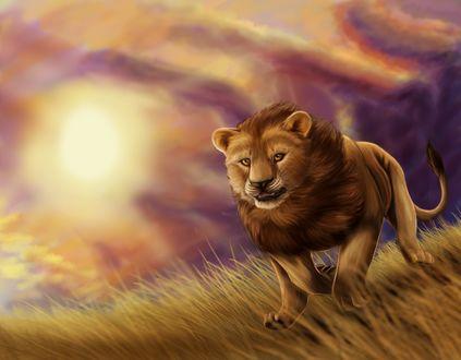 Обои Лев спешит во всю прыть за добычей
