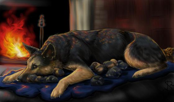 Обои Собака овчарка лежит у пылающего камина