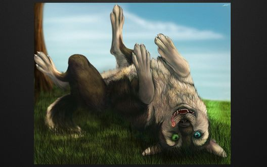 Обои Волк с разного цвета глазами, лежит на спине, высунул язык и смотрит вверх