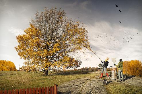 Обои Девушка собирает пылесосом опадающую с дерева осеннюю листву, мужчина с веерными граблями стоит рядом и считает летающих в небе ворон, by Eric Johansson / Эрик Йоханссон