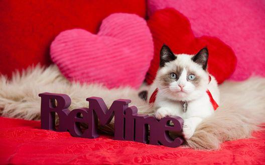 Обои Котенок лежит на диване и держит буквы BeMine / Будь моей
