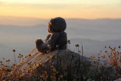 Обои Игрушечный мишка сидит на камне среди сухих цветов и смотрит вдаль