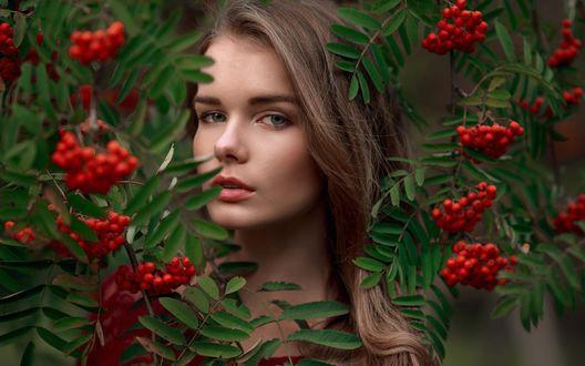Обои Модель Irina Regent / Ирина Регент среди веток рябины