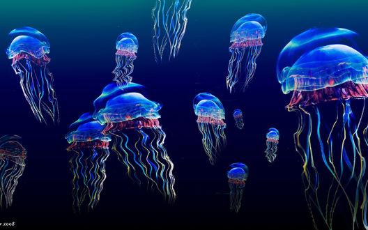 Обои Красивые медузы под водой