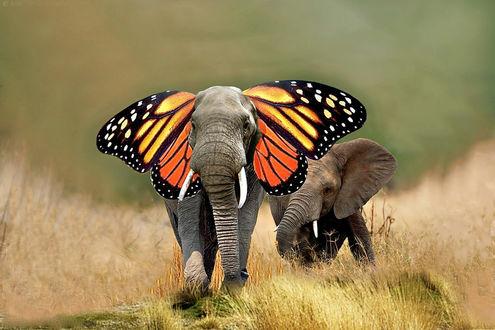 Обои Слоны в саванне. один из которых с крыльями бабочки вместо ушей, рендеринг
