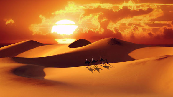 Обои Погонщик с верблюдами идет по Сахаре, by Furstset
