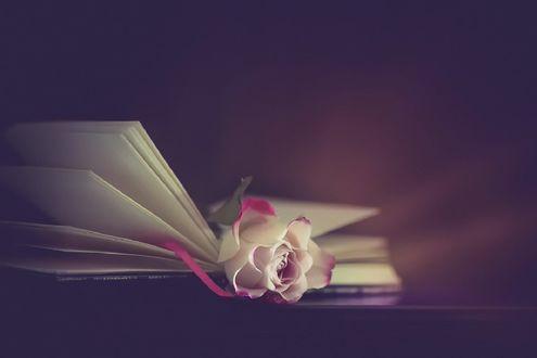 Обои Нежная роза лежит в открытой книге