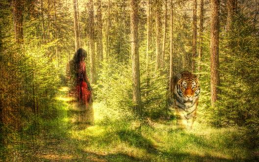 Обои Девушка в красном, тигр, лес пронизанный солнечным светом, текстура