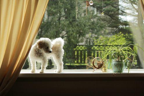Обои Собака стоит на подоконнике окна, by LovieLovetree