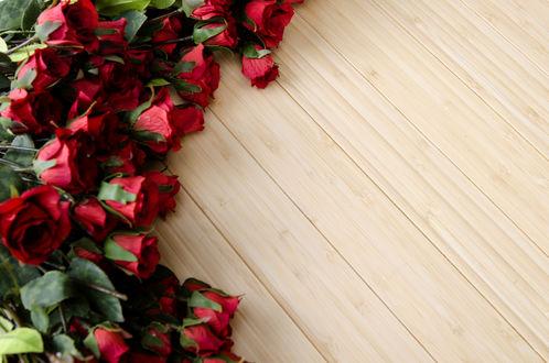 Обои Много красных роз лежат на деревянной поверхности