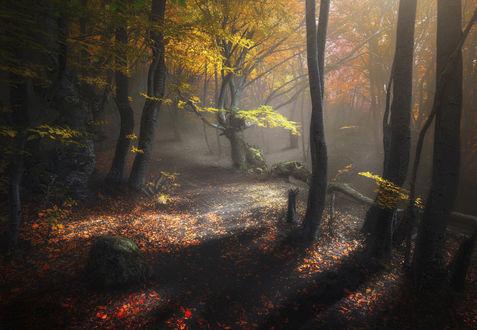 Обои Осенний лес, Демерджи, фотограф Ilya Melikhov