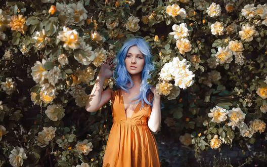 Обои Девушка с голубыми волосами стоит возле цветущих кустов роз