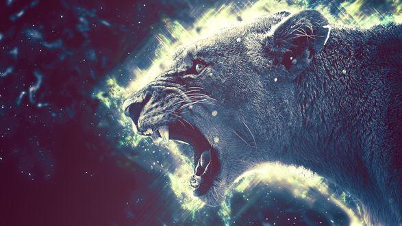 Обои Рычащая львица на темном фоне