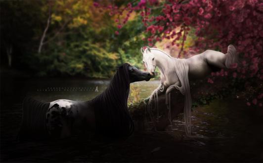 Обои Влюбленные фантастические лошади у воды, by perfectperfection