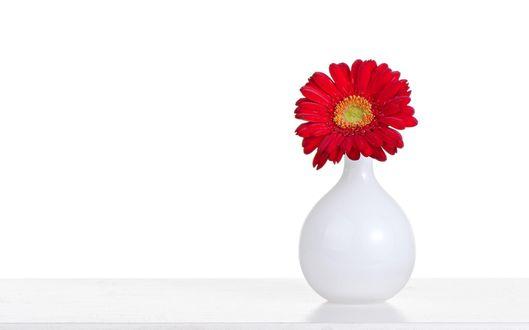 Обои Красная гербера в белой вазе