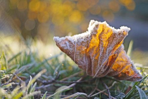 Обои Осенний листок лежит на траве