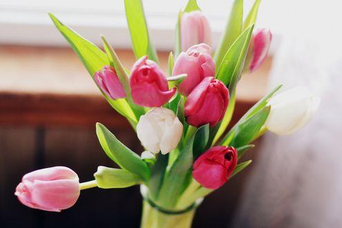 Обои Букет тюльпанов на размытом фоне