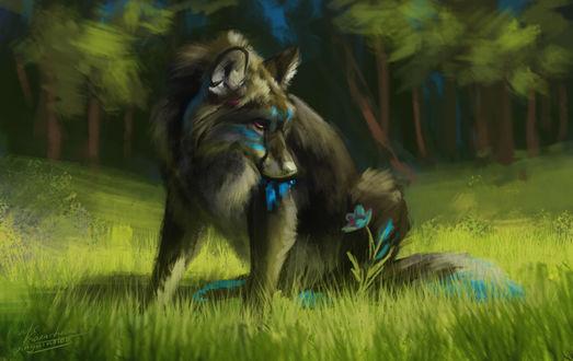 Обои Волк с синими отметинами на шерсти смотрит на цветок