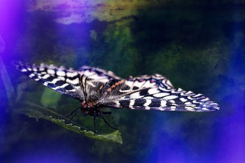 Обои Бабочка на зеленом листе