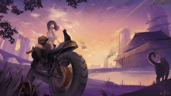 Обои Девушка с котом сидят на мотоцикле, by Minnie Zhou
