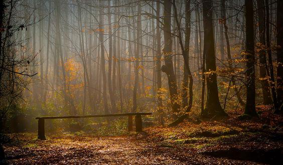 Обои Лавочка в осеннем лесу, фотограф Patrice Thomas