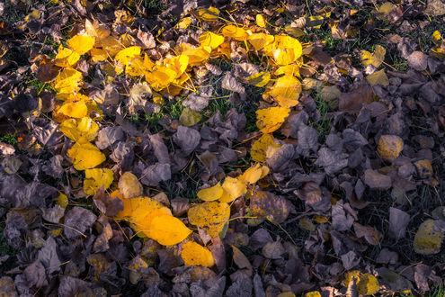 Обои Сердечко из желтых осенних листьев, фотограф Hamdija Haracic